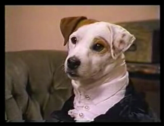Wishbone the dog as Mr. Darcy